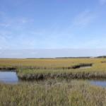 the salt marsh on Amelia Island