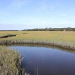 more marsh