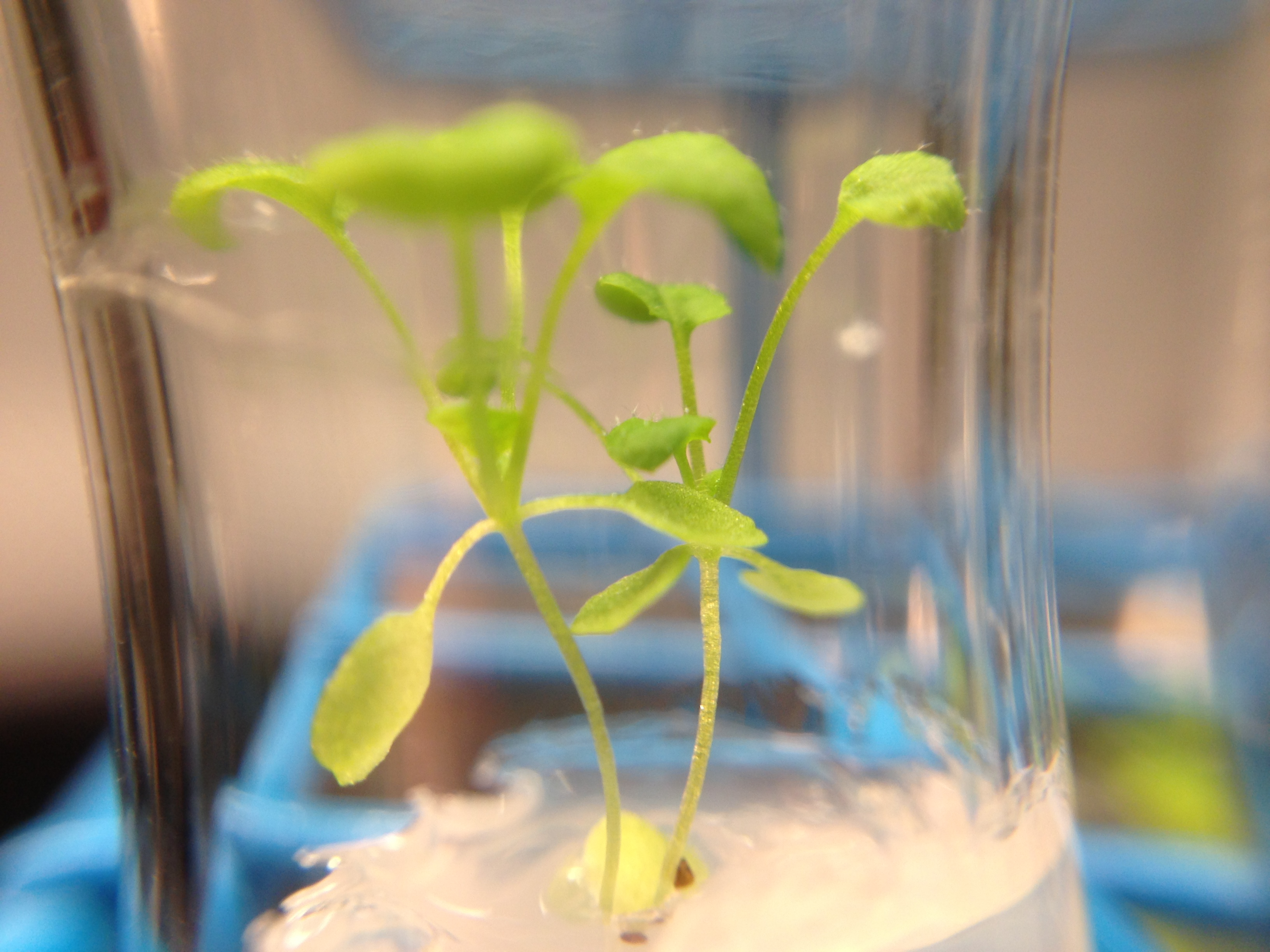 arabidopsis grown in 10% d2o