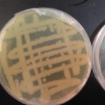 D2O adapted E. coli grown on DI LB agar